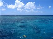 View of the Corals in the Great Barrier Reef from the Catamaran.: by justin_and_leigh, Views[257]