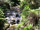 Beginning of the Leura Cascades.: by justin_and_leigh, Views[215]