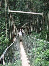 canopy walk 50 m above ground: by justineillana, Views[115]
