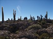 A forest of cactus and people...: by justinzani, Views[200]