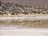 Flamencos (Atacama): by k-lero, Views[645]
