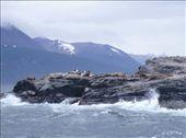 Leones Marinos cerca de Ushuaia: by k-lero, Views[520]