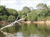 Más del Pantanal: by k-lero, Views[373]