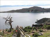 Isla del Sol: by k-lero, Views[156]