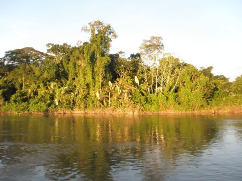 Más selva, todo selva durante 7 días, interminable selva
