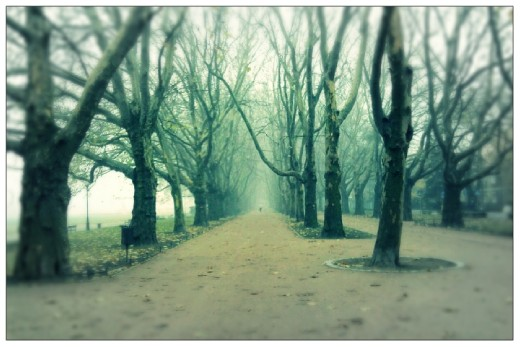 It is Platan Alley. I made this photo while walking in a fog.