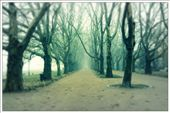 It is Platan Alley. I made this photo while walking in a fog.: by kaisa88, Views[152]
