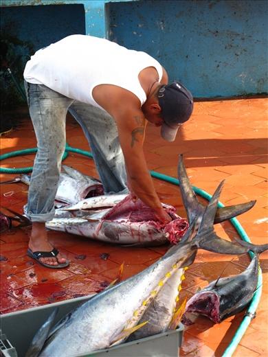Fresh yellow fin tuna on Isla Santa Cruz