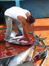 Fresh yellow fin tuna on Isla Santa Cruz: by kaitlynfaebarrett, Views[158]