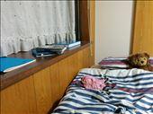 My room: bed and windowsill: by kakimono, Views[86]