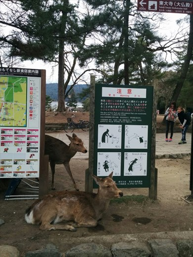 Peaceful deer siting by a sign with all the ways she can hurt you