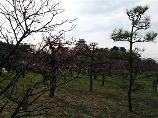 Plum Trees and Osakajo