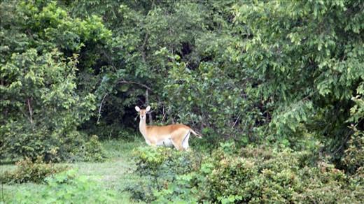 Eye to eye with an antelope