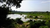 Kakum National Park's savanna, lush during the wet season, the setting of the safari: by kakum, Views[1174]