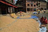 An unforgettable journey to the medieval city of Nepal Bhaktapur, wondering around the streets, where the women picking up the harvested rice, with happy faces, and full of colour clothes. It's mid october and Nepali Decimated their rice.: by kalogiorgi, Views[398]