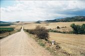 The many faces of The Way: the dusty roads of the Meseta.: by kaloz, Views[102]