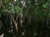 Mangroves: by kamzam, Views[193]
