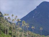 Valle de Cocora: by kamzam, Views[91]