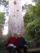 Karen and Erik in front of the giant Kauri: by karen-and-erik, Views[158]