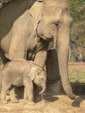Mor og barn (4 mdr. gammel) Naa, soed lille en: by karen_backpacking_in_asia, Views[153]