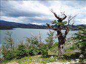 Lago Nordenskjoeld : by karin_lang, Views[109]