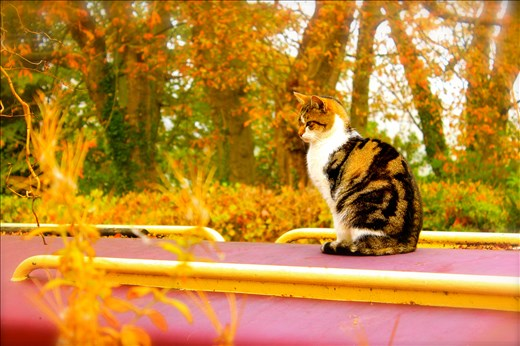 Sleepy houseboats filled with sleeping people float up and down in the Thames; they brush up and creak against the path. A bright red boat is tethered to a mailbox, and sitting in it, on it, and around it are its homeowners - a clowder of river cats.
