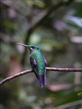 The hummingbird epitomises the beauty and fragiliy of many ecosystems.: by kate17, Views[140]