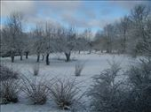 Back Yard: by katedwyer, Views[267]