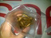crickets! : by katesyearinthailand, Views[273]