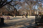 Dog run at Tompkins Square Park: by kath_atkins, Views[51]