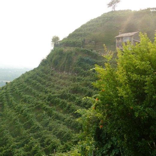 Hilltop vineyards of Col Vetoraz