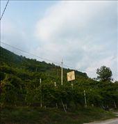 Val d'Oca vineyards: by kathybechtel, Views[521]