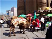 This is the poor camel used for tourist photos at the Grand Bazarre.(it was very cute, you could have a ride): by katie_rose, Views[313]