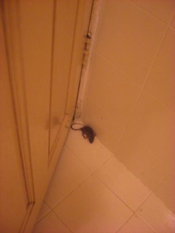Its a little mouse!! Hanna to the rescue!!