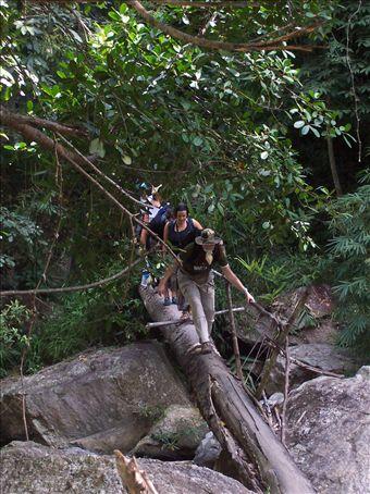 crossing log bridge on our trek
