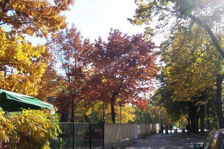 autumn colours in Sofia