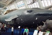 massive whale, Natural History Museum, London: by keera, Views[1376]