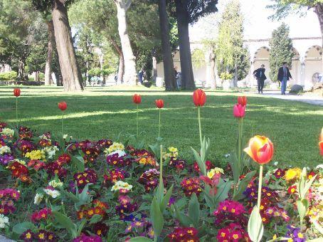 tulips at Topkapi Palace