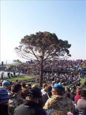 'The' Lone Pine tree: by keera, Views[295]