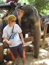 Vinny gets a startle when Kun Tong the elephant slaps him on the head with his massive ears.... heh heh....: by kelly, Views[241]