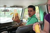 Fresh bananas from a roadside stand: by kendal00, Views[156]