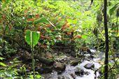 Rainforest: by kendal00, Views[75]