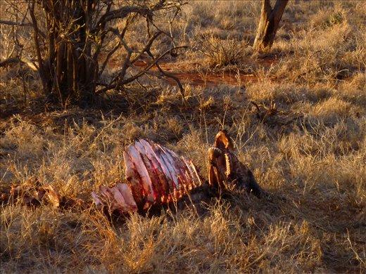 animal cadaver - seen in Tsavo