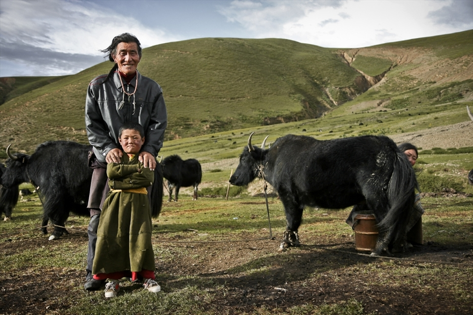 At the end of the day, it's time to milk the yaks, their most valuable possession. The kids collect them around the near valleys as the olders take the milk. In the photos are Baba, Nyima and Mother.