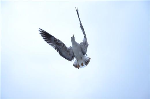 Friendly bird in Dubrovnik, Croatia.