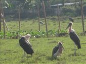 storks on the side of the road: by kiara19, Views[181]