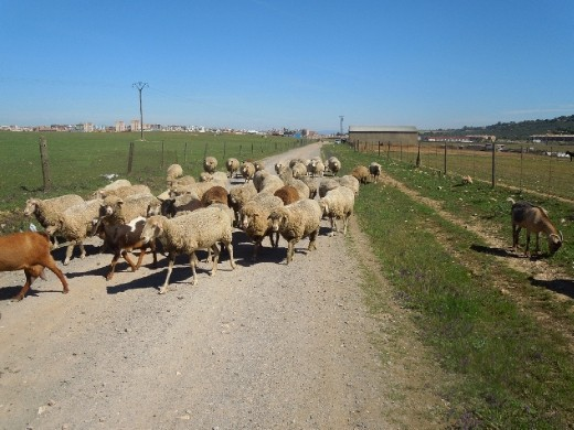 Day 13: Traffic on the Way into Casares
