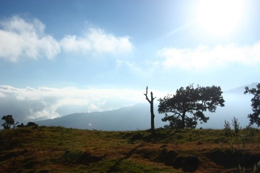There are rarely trees in Mount Rinjani, but there's always a fresh feeling surrounding those area