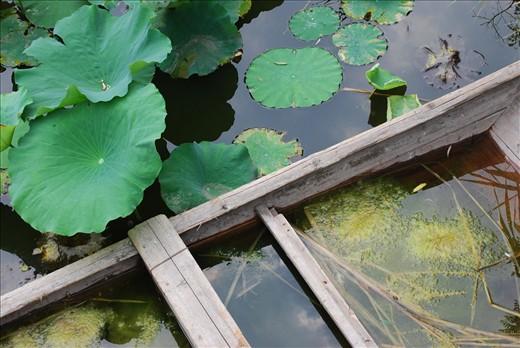 Water and vegetation form a miniature pond inside a broken boat.