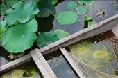 Water and vegetation form a miniature pond inside a broken boat.: by kire, Views[457]